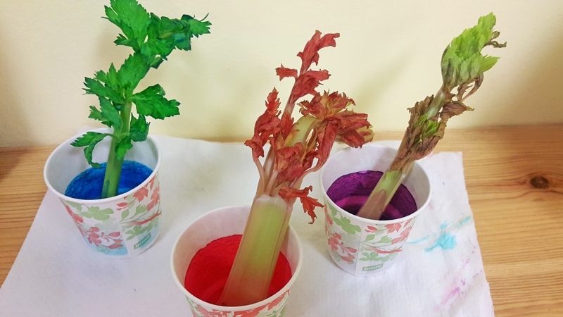 100 best flower food color beautiful fabric flower for How to dye flowers using food coloring